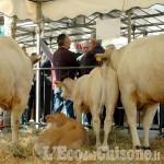 A Cavour la ventesima edizione della Rassegna dedicata alla carne bovina