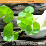 Centella asiatica -  un estratto magico per la pelle