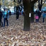 A Cumiana cresce la protesta per salvare i tigli dei Giardini Tassone