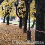Cumiana: presidio per scongiurare il taglio di alcuni tigli nei Giardini Tassone