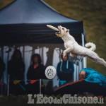 A Cumiana i Campionati di Disc Dog, frisbee acrobatico con il cane