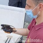 Revello: i Vigili del fuoco salvano una rondine intrappolata su un tetto