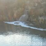Vinovo: inquinamento nel Chisola segnalato all'Arpa