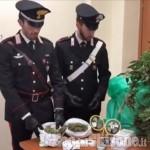 Frossasco: coltivava marijuana in cantina, arrestato 28enne