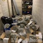 Nichelino: 50 chili di droga in un garage di largo delle Alpi, arrestato il giovane fattorino-spacciatore