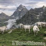 """Cavour: le foto di Christopher Dalmasso vincono il concorso """"Carne di Razza Piemontese"""""""