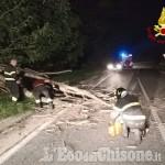 Roure: un tronco sulla Provinciale 23, l'intervento dei Vigili del fuoco