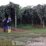 Altri controlli nei frutteti del saluzzese, tre lavoratori non in regola