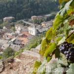 """Il Ramìe tra i primi prodotti in Italia a marchio """"Prodotto di Montagna"""""""