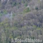 Pinasca: incendio domato sul nascere da Vigili del fuoco e Aib
