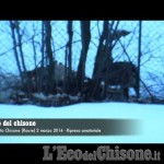 Embedded thumbnail for Il pasto del lupo in diretta dal balcone di casa