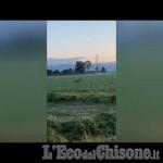 Embedded thumbnail for Piobesi: avvistato il primo lupo lungo l'Oitana