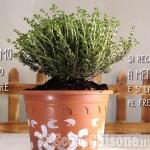 Embedded thumbnail for Scervelliamoci di aprile: il nostro orto di erbe officinali