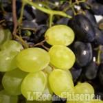 Embedded thumbnail for Scervelliamoci settembre 2018: Pane vino e lieviti
