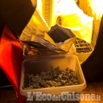 Embedded thumbnail for Beinasco: coltiva marijuana in mansarda, arrestato pizzaiolo